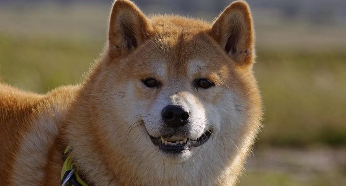 DOGE is trading at around $0.50 after CoinFlip adds the coin to its ATMs