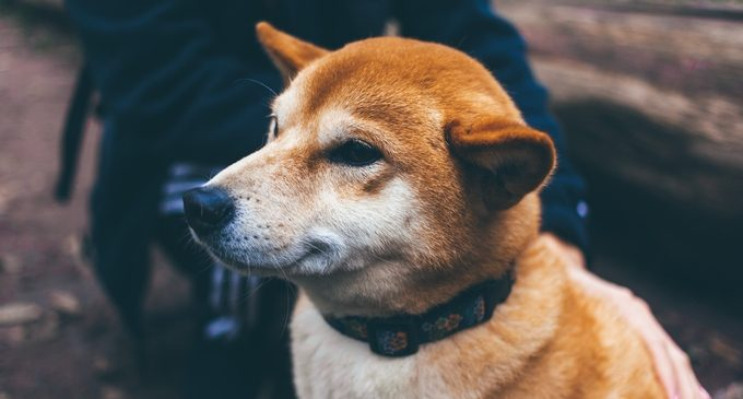 Dogecoin's price increase earned it 10th place by market cap
