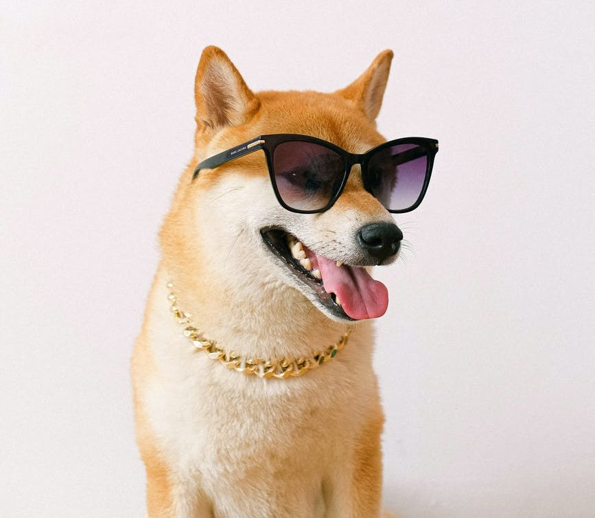 Shiba Inu-inspired Crypto Sees Price Spike after Elon Musk's Recent Tweet